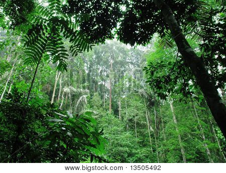 tropical green forest