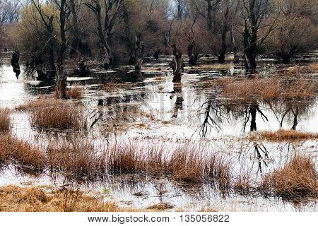 Wetlands In Late Autumn