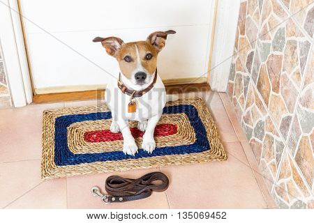 Dog And Owner  With Leash