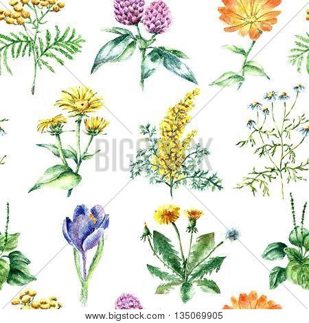 Hand drawn watercolor botanical illustration. Medical herbs drawing isolated on the white background. Medical herbs illustration, herbarium. seamless pattern. vector