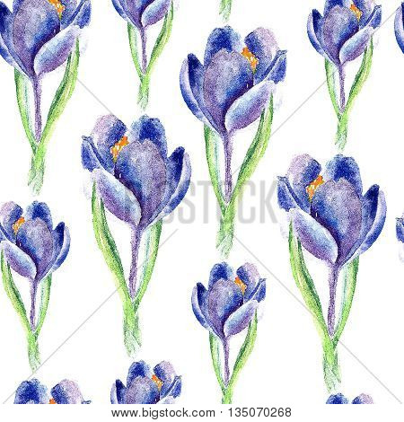 Hand drawn watercolor botanical illustration of the saffron plant. Saffron drawing isolated on the white background. Medical herbs illustration, herbarium. seamless pattern. vector