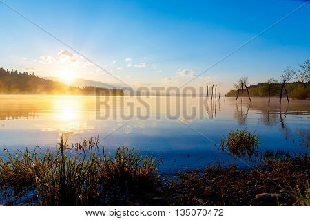 detail of grass halm at a lake in magical morning time with dawning sun. Trees as leftovers of a mole. Slovakia Liptovska Mara in region Liptov