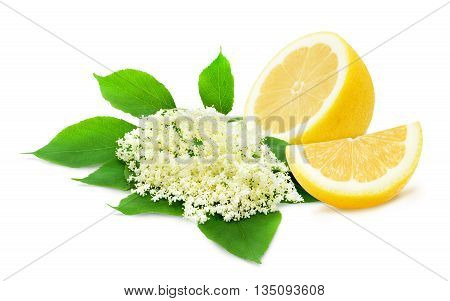 Sprig of sambucus with green leaves and half of lemon isolated on a white background. Ingredients for syrup. Design element for product label, catalog print, web use.