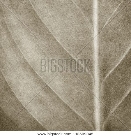 leaf pattern paint background