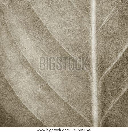 leaf pattern paint background