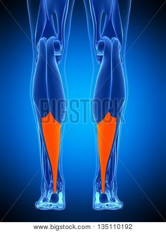 3d rendered, medically accurate illustration of the achilles tendon