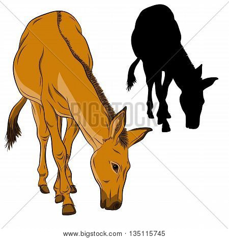 donkey  black silhouette vector illustration realistic brown