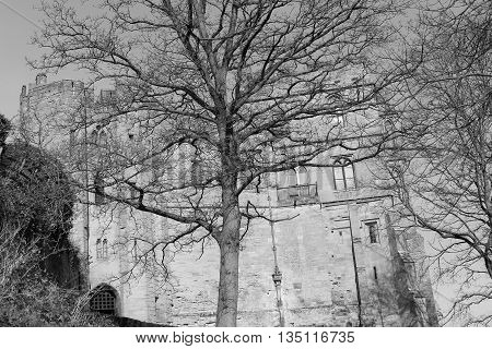 Dead tree with background of castle in warwick united kingdom (soft focus)