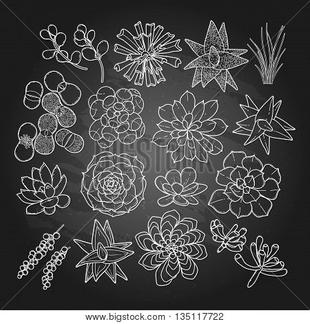 Graphic succulent collection isolated on chalkboard. Vector floral design