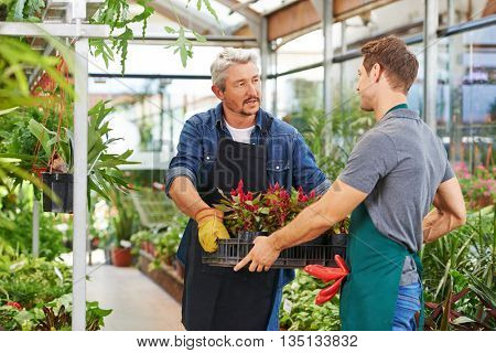 Young man getting apprenticeship in nursery shop helping a gardener