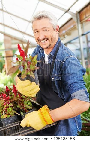 Happy salesman offering a woolflower (celosia) in a nursery shop