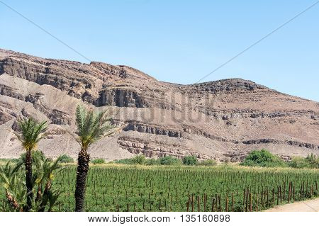 Small Stripe Of Agriculture In The Desert