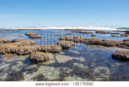 Rock pools and beach reef with clear Indian Ocean waters at the Blue Holes beach in Kalbarri, Western Australia.