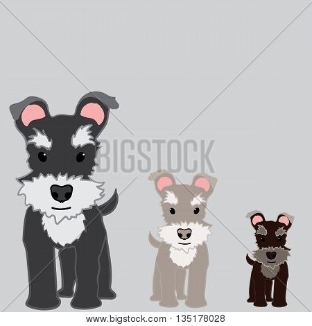 Cute and sweet little Schnauzer puppy. 3 sizes.