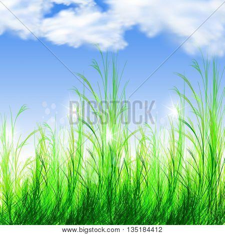 summer illustration background