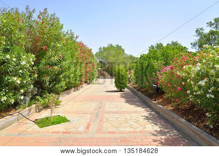 Alley with bushes with red flowers on Crete island Greece.