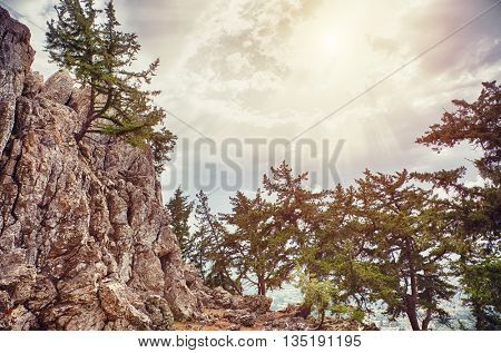 pines on the stone cliff photo. Rhodes. Greece
