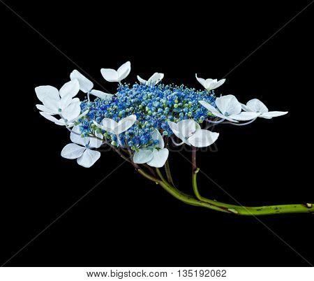detail of flower on black background