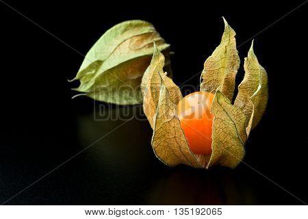 detail of alkekengi fruit background