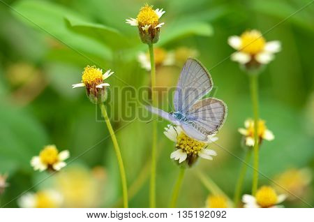 Small Butterfly On Mexican Daisy Flower With Natural Green Background.