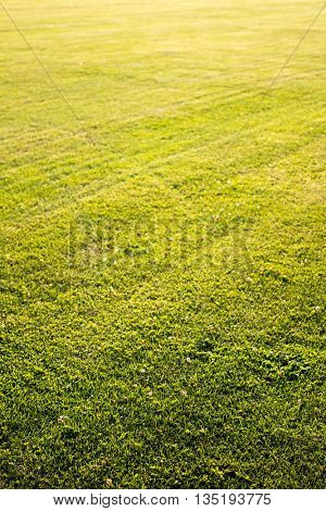 green cutted grass background
