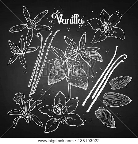 Graphic vanilla flowers collection isolated on chalkboard. Vector floral design elements