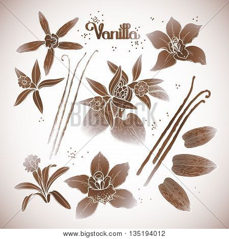 Graphic vanilla flowers collection isolated on white background. Vector floral design elements