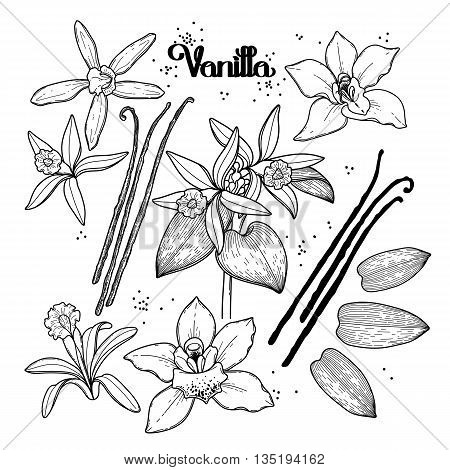 Graphic vanilla flowers collection isolated on white background. Vector floral design elements. Coloring book page design for adults and kids