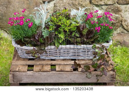 Potted Garden Plants In A Basket.