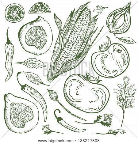 Vegetarian healthy food mexican cuisine outline illustrations of corn, pepper, tomato, avocado and spices