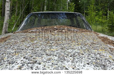 An abandoned car in a forest. Since, I don´t know when. Organic stuff all over the car.
