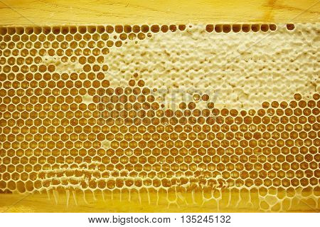 Yellow honeycomb full of honey for blackground