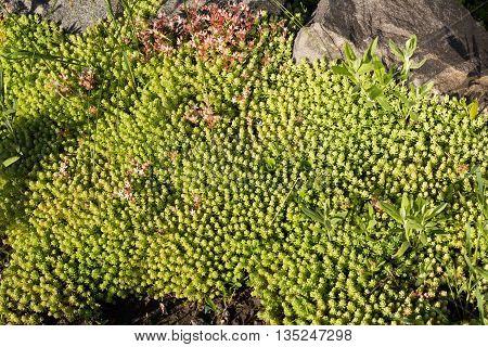 background of summer light green Bush adn stone