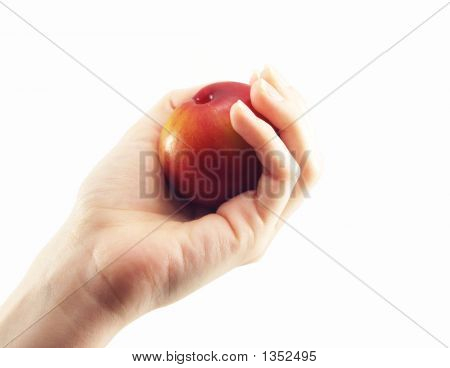 Plum Or Ciruela In A Hand