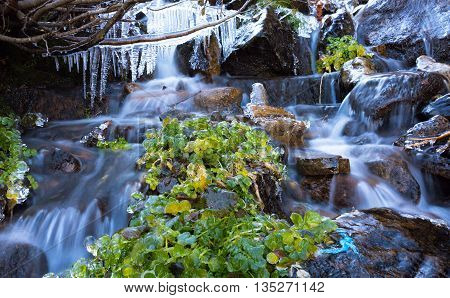 Rapid Mountain Creek Blurred Pristine Water Flow Grass Covered by Ice Armor and Icicles Hanging on Tree Branch