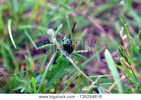 Closeup bug life on flower plant in green blurred background nature life nature background