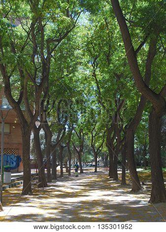 Arboleda de Murcia con multitud de árboles