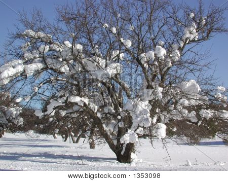 Cotton Ball Snow Tree