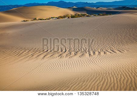 Windy and hot morning in the desert. Small ripples on the sand dunes. Picturesque Death Valley, USA. Mesquite Flat Sand Dunes