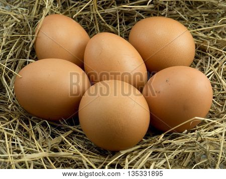 Six Egg on a haystack background .