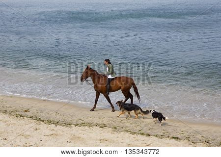 BAIONA, GALICIA, SPAIN - AUGUST 26: young woman riding a horse with her dogs at the beach, on August 26, 2015 in Baiona, Galicia, Spain