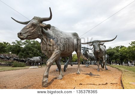 DALLAS USA - APR 9: Cattle drive sculpture in the city of Dallas. The Statue was gifted by Trammel Crow to the city of Dallas. April 9 2016 in Dallas Texas USA