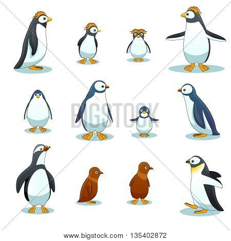 Penguins characters in various poses vector set. Penguin animal illustration, cartoon penguin, winter bird penguin