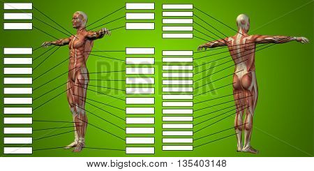 3D illustration of a concept or conceptual human man anatomy and muscle for sport and textbox on green background