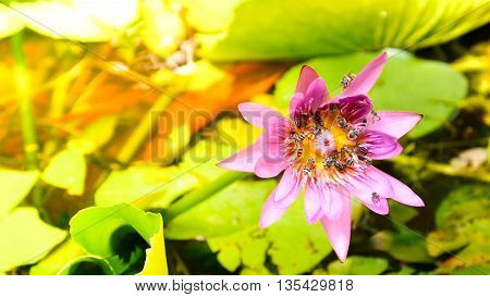 Close Up And Blur Background Morning Tone Honey Bee Flying And Bees Collecting Pollen In Deep Of Col