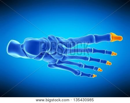 3d rendered, medically accurate illustration of the distal phalanx bones