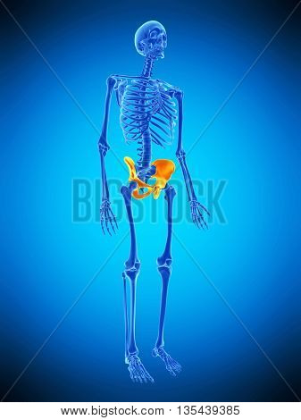 3d rendered, medically accurate illustration of the skeletal hip