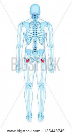 3d rendered, medically accurate illustration of the quadratus femoris