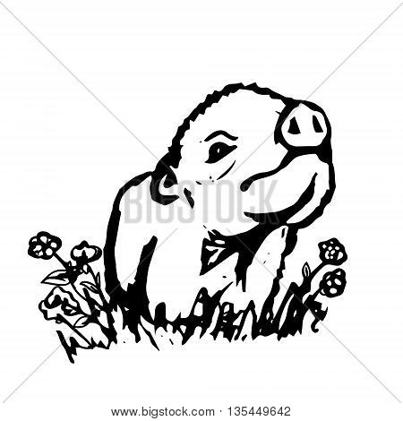 The graphic image of a little pig. Drawing a cute Piglet from black lines on a white background. Vector illustration