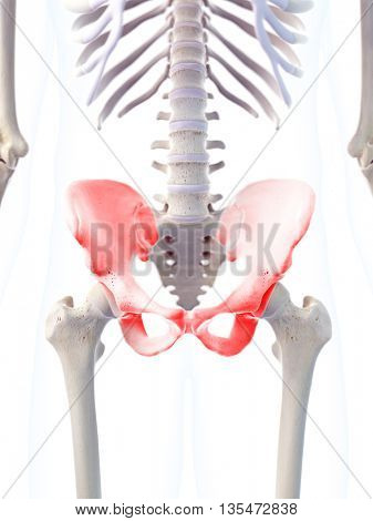 3d rendered, medically accurate 3d illustration of the skeletal hip